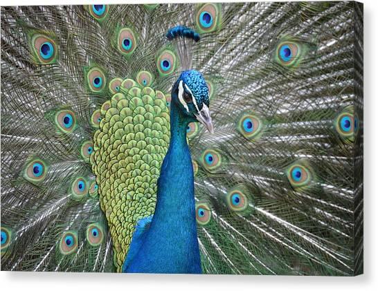 Magnifique Canvas Print