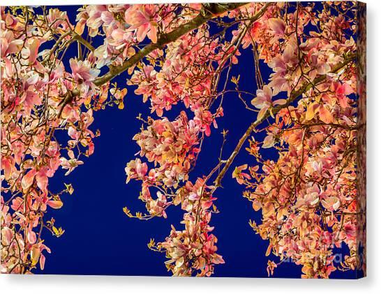 Magnolia - Redlight  Canvas Print