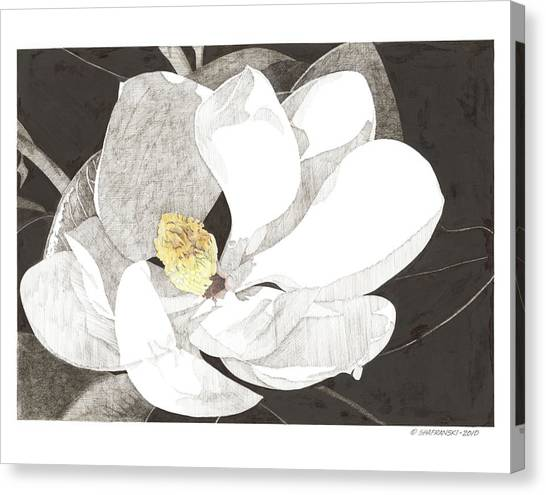 Magnolia 1 Canvas Print by Paul Shafranski