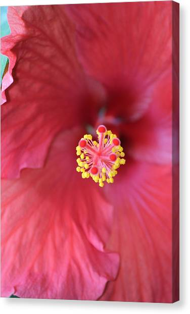 Magnolia 5  Canvas Print