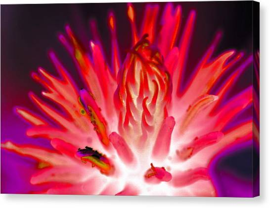 Canvas Print featuring the photograph Magnolia Art by David Rich