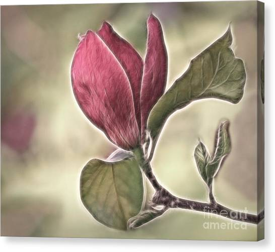 Magnolia Glow Canvas Print