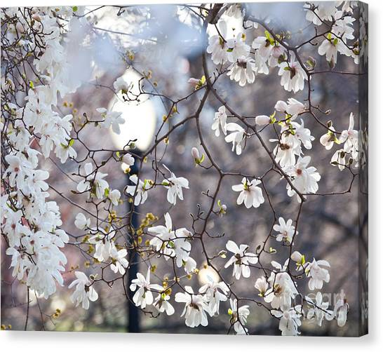 Magnolia Impression 2 Canvas Print
