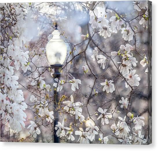 Magnolia Impression Blend Canvas Print