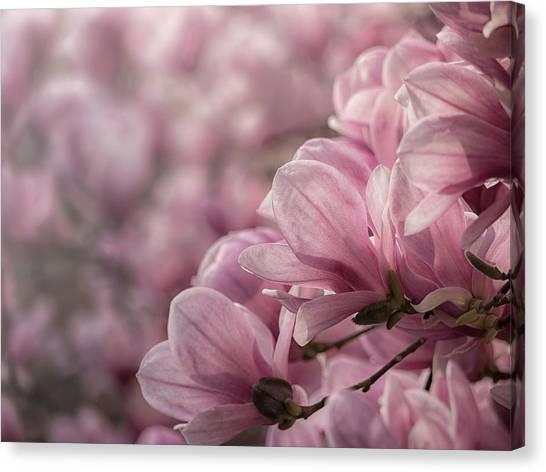 Magnolia Layers Canvas Print