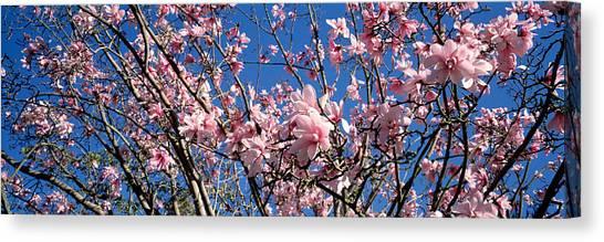 Magnolia Tree Canvas Prints Page 5 Of 99 Fine Art America