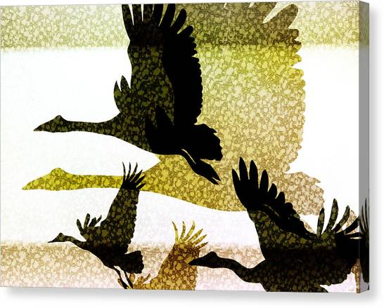 Magpies Canvas Print - Magpie Geese In Flight by Holly Kempe