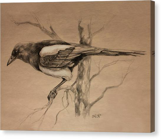 Magpies Canvas Print - Magpie Sketch by Derrick Higgins