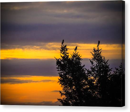 Magpies At Sunrise Canvas Print