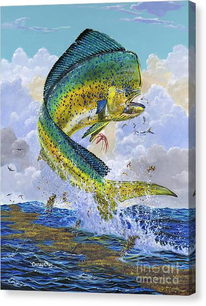 Fly Fishing Canvas Print - Mahi Hookup Off0020 by Carey Chen