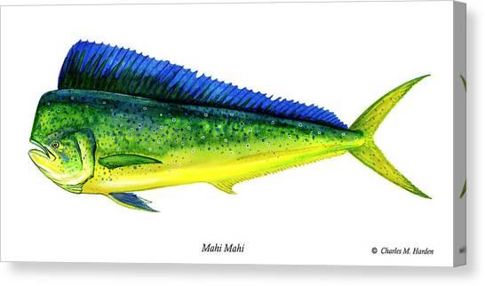Dolphins Canvas Print - Mahi Mahi by Charles Harden