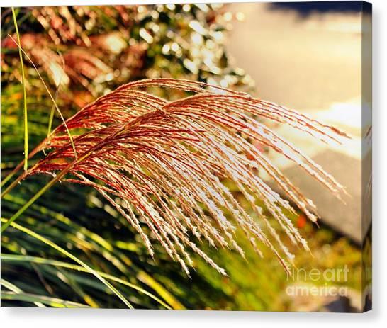 Maiden Seagrass Flower Head Canvas Print