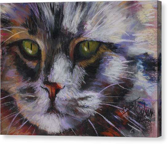Main Coons Canvas Print - Main Coon by Billie Colson