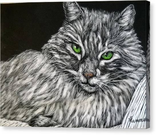 Main Coons Canvas Print - Main Coon Cat by Sandy Hemmer