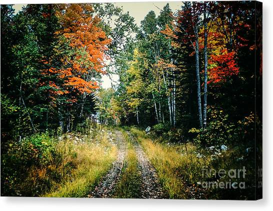Maine Back Road Canvas Print