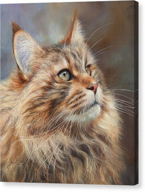 Main Coons Canvas Print - Maine Coon Cat by David Stribbling