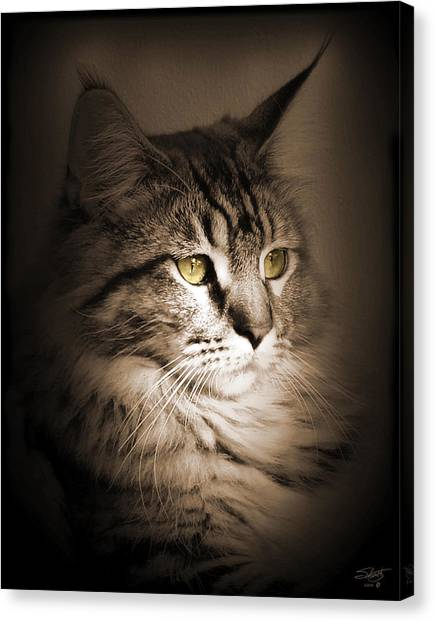 Maine Coon Portrait Canvas Print