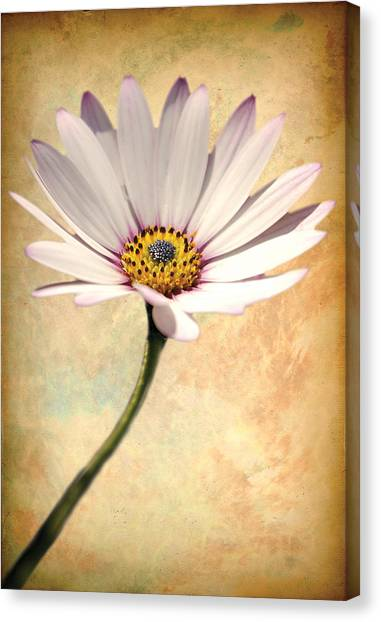 Maisy Daisy Canvas Print