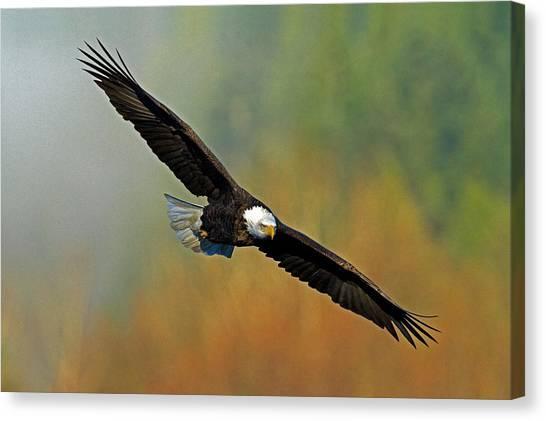 Majestic Flight Canvas Print