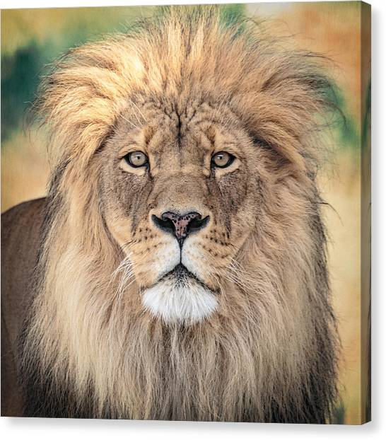 Majestic King Canvas Print