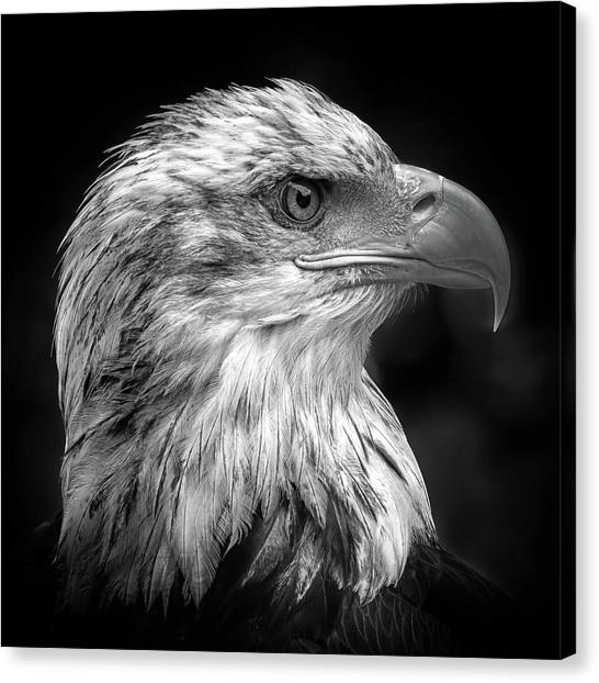 Eagles Canvas Print - Majestic by Peter Pfeiffer