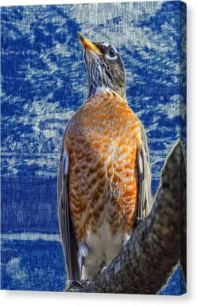 Majestic Robin Blues Canvas Print by Bill Tiepelman