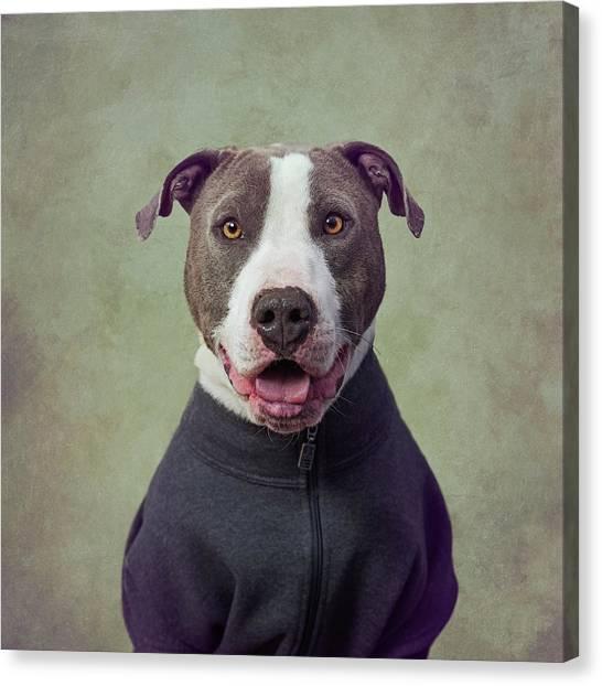 Fineart Canvas Print - Major Good Boy by Tammy Swarek