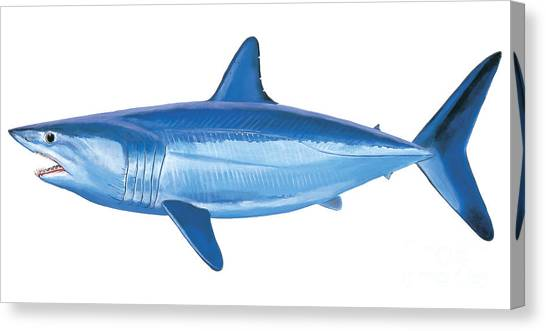 Shark Canvas Print - Mako Shark by Carey Chen