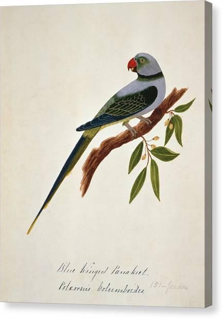 Parakeets Canvas Print - Malabar Parakeet by Natural History Museum, London/science Photo Library