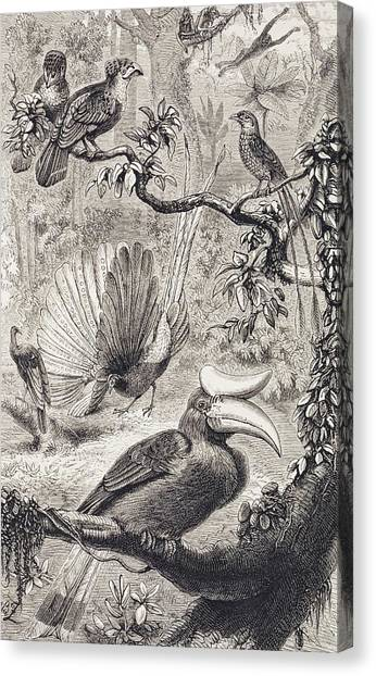 Hornbill Canvas Print - Malayan Forest Birds by Natural History Museum, London/science Photo Library