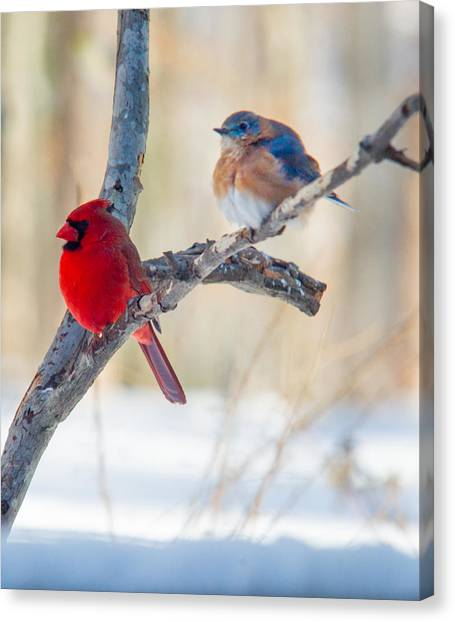 Male Bluebird And Cardinal On Branch Canvas Print