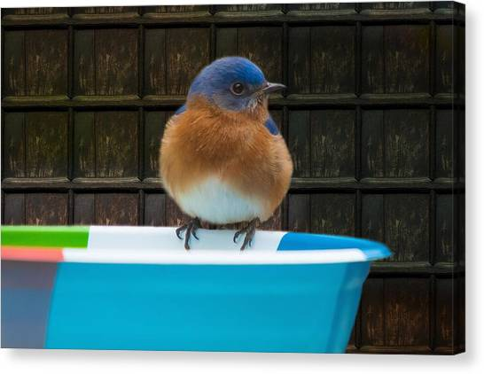 Canvas Print featuring the photograph Male Eastern Bluebird by Robert L Jackson