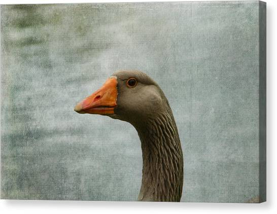 Male Graylag Goose Profile Canvas Print