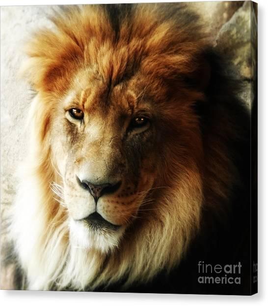 Male Lion Face Close Up Canvas Print