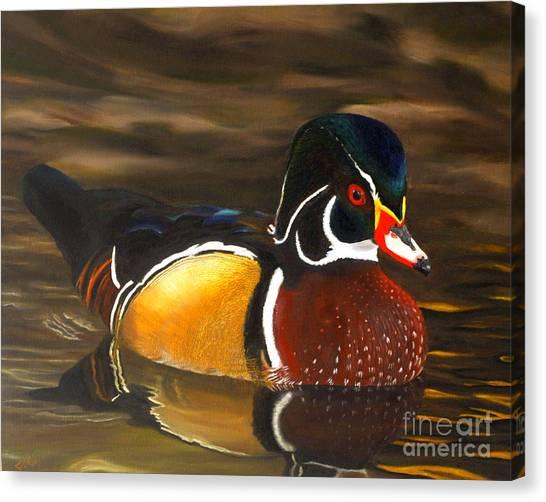 Male Wood Duck Portrait Canvas Print