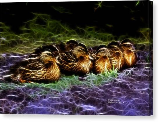 Mallard -  9230 - F Canvas Print