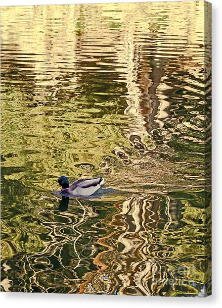 Canvas Print featuring the photograph Mallard Painting by Kate Brown