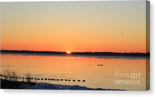 Mallards At Sunrise Canvas Print