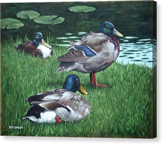 Mallards On River Bank Canvas Print
