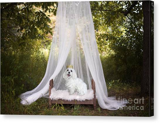 Maltese Princess Canvas Print