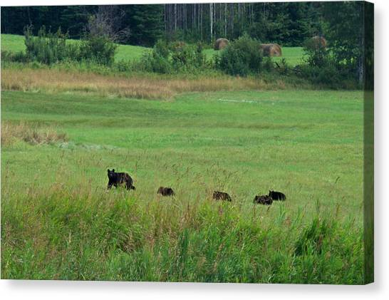 Mama Bear And 4 Cubs Canvas Print