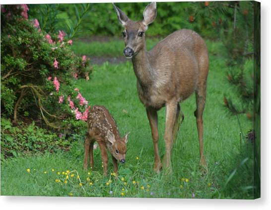 Mama Deer And Baby Bambi Canvas Print