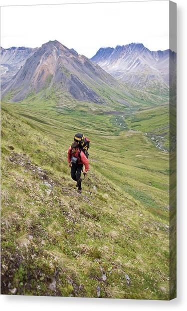 Backpacks Canvas Print - Man Hiking Across Tundra In Denali by Whit Richardson