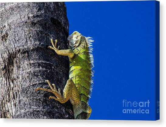 Man Is This Beach Crowded Canvas Print