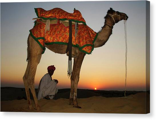 Thar Desert Canvas Print - Man Sitting With His Camel At Sunset by Piper Mackay