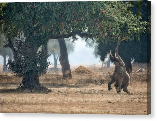 Stretched Canvas Print - Mana Pools Secret by Alessandro Catta