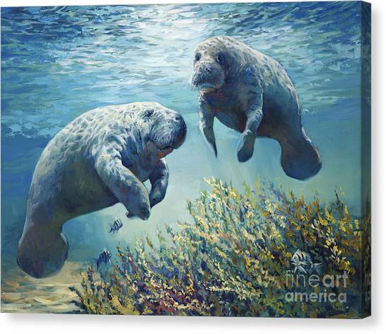 Ocean Life Canvas Print - Manatee's by Laurie Hein