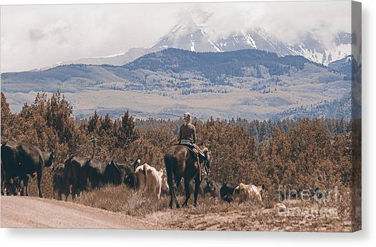 Brown Ranch Trail Canvas Print - Mancos Cowgirl Cattle Drive by Janice Pariza