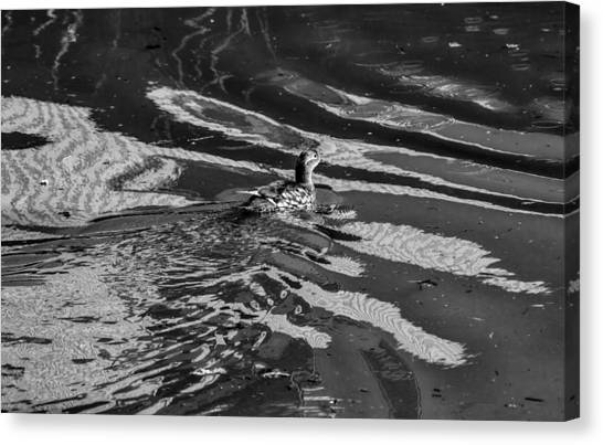 Mandarin Duck Bw - Leif Sohlman Canvas Print