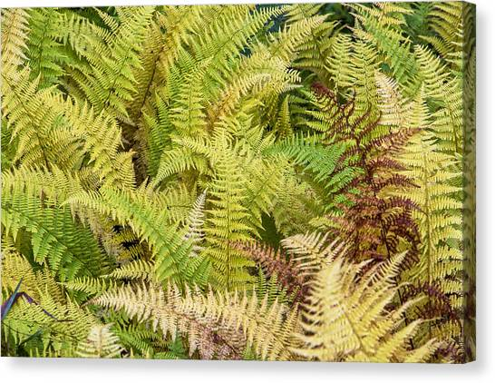 Mane Fern Canvas Print